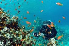 Dirk Van den Bergh – Close encounter met de giftigste vis op aarde