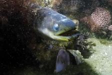 Dirk Van den Bergh – Nooit de link gelegd tussen paling en murene
