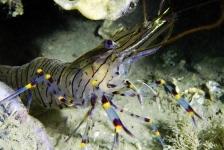 Dirk Van den Bergh – Specialty krabben, kreeften en garnalen
