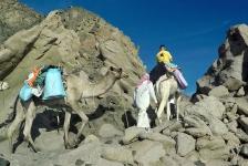 Dirk Van den Bergh – Met de kameel naar de duikstek