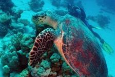 Dirk Van den Bergh – Giant Turtle!