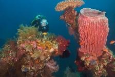 In beeld: Duiken op Bali