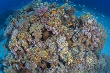 Olympus PEN Experience gaat naar Rode Zee