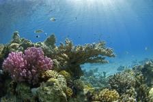 Diving Holidays organiseert info-avond Red Sea Diving Safari