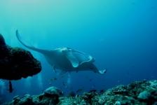 Succesvolle reeks DUIKEN-lezersreizen naar de Malediven!