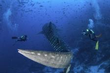 De duikvakanties van je dromen op het Diving World-plein