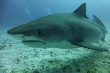 Susan Dogterom – Op de bodem zitten met haaien