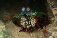 Saskia Uit den Bogaard – Safari boven én onder water in Kenia (7)