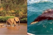 Saskia Uit den Bogaard – Safari boven én onder water in Kenia (1)