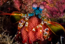 Dive and Travel presenteert Indonesië en Filipijnen