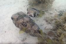 In beeld: Egelvis blijft verstrikt maatje trouw