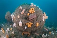 Expeditie Doggersbank: nieuwe diersoort voor Nederland en 'andere' onderzeeër gevonden