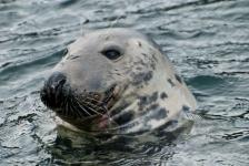 Gery Beeckmans – De zeehonden duiken met mij