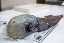 De vis zonder gezicht en nog meer 'lelijkerds'