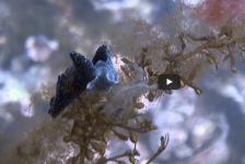 Tim de Haan – Duiken bij het USAT Liberty Shipwreck
