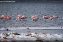 Rob Maller – Flamingo's