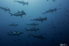Reportagewedstrijd 2016 – Yo nadé con tiburones y sobrevivi