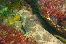 Reportagewedstrijd – Haaien: een opgezwollen verhaal