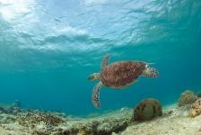 Steven Stegeman – Curaçao 8: Nog een keer schildpadden!
