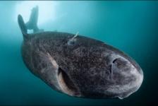 Shark facts: Wat haaien en kikkers met elkaar gemeen hebben