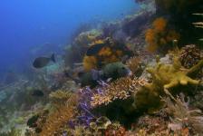 Hot reefs, hot corals