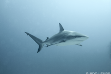 Kijktip! Caribische haaien bij Vroege Vogels