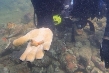 Nederlands scheepswrak bij Trinidad gevonden