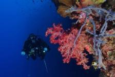 Sandra Boerlage – Een duik vol lol in Bunaken