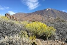 Steven Stegeman – Tenerife, eiland van de eeuwige lente