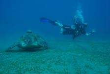 Willem-Jan Lock – Eerste duikvakantie in Egypte