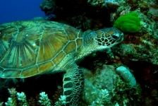 Stans van Hoek – Live-aboard op het Great Barrier Reef