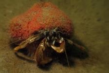 Aike Willemsen – Weekendje slakken zoeken