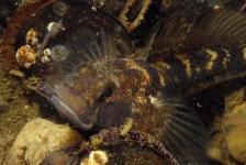 Aike Willemsen – Het houdt niet op met de slakjes