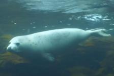 Vlog 'In de Noordzee' – Duiken met zeehonden