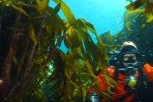 Vlog 'In de Noordzee' – Kelp en koraal