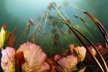 Waterlelies – Het verhaal achter de foto