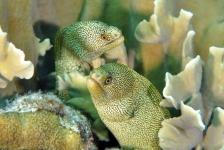 Bonaire fotowedstrijd 2018 – Shortlist Onderwaterleven