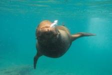 Jeanette Zoetendal – Galapagos-reis