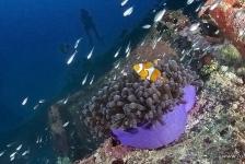 Top 5: duiken in Indonesië