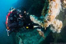 Expeditie Duik de Noordzee schoon – het verhaal achter de foto