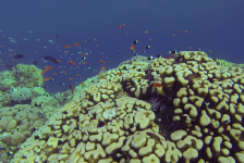 Kasper Berg -GOPRO Marsa Alam music video