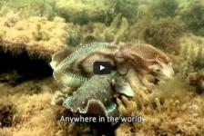 Kijktip: Het mysterie van de sepia bij Vroege Vogels