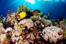 Herfstspecial bij Diving Holidays