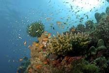 Thailand sluit tijdelijk 32 duikspots
