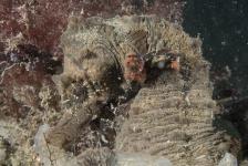 Zeepaardjes ook in de winterse Oosterschelde