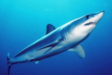Kies je favoriete haai of rog!
