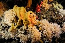 Koraalriffen – Al het goede komt van boven