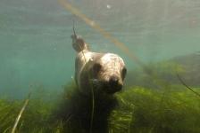 Bas Kulderij – Kelp, zeeleeuwen en haaien