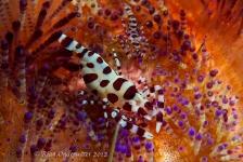 Inge Onderwater – Relaxt duiken in Lembeh