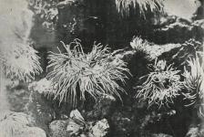 Duik in het verleden: de eerste onderwaterfoto's